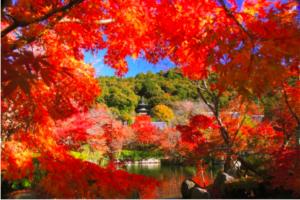 2018京都紅葉景點推介